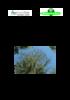 Enjeux et stratégies de substitution du hêtre - application/pdf